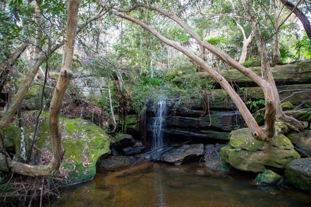 AWAT3563 LR Exploring Mullet Creek in Irrawong Reserve