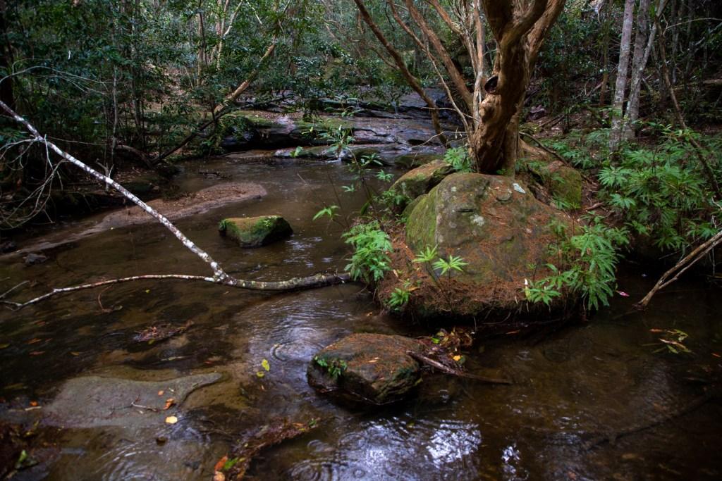 AWAT3623 LR Exploring Mullet Creek in Irrawong Reserve