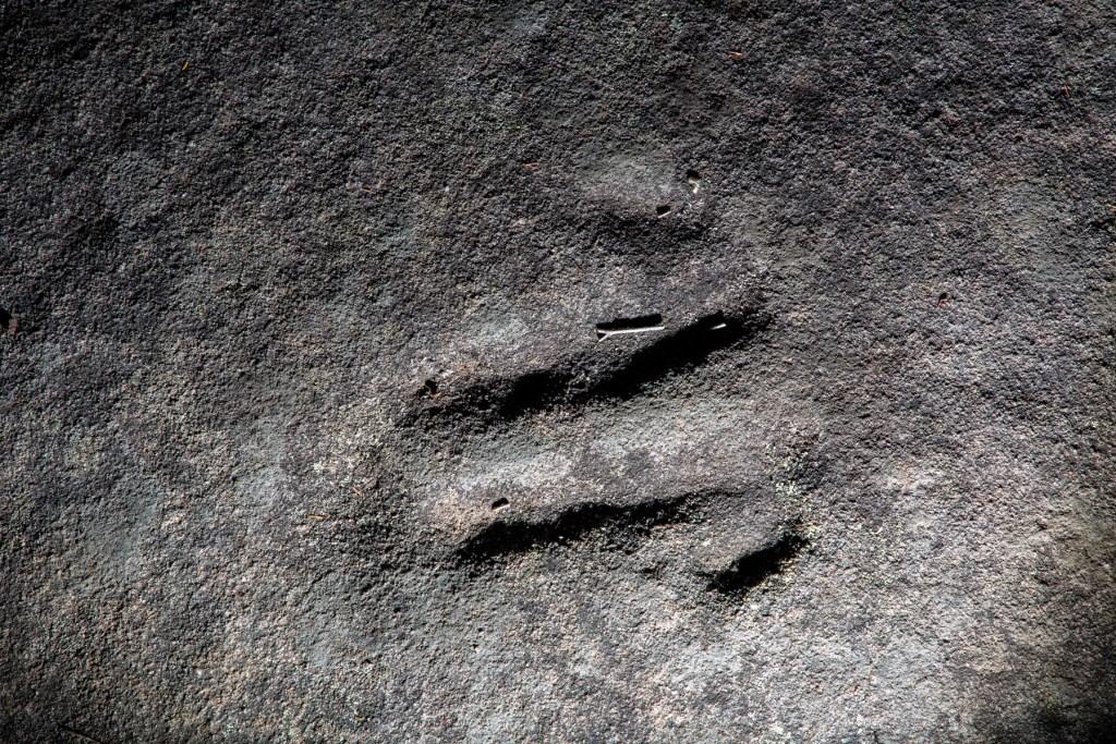 AWAT3786 LR Kissing Point Road Animal Tracks