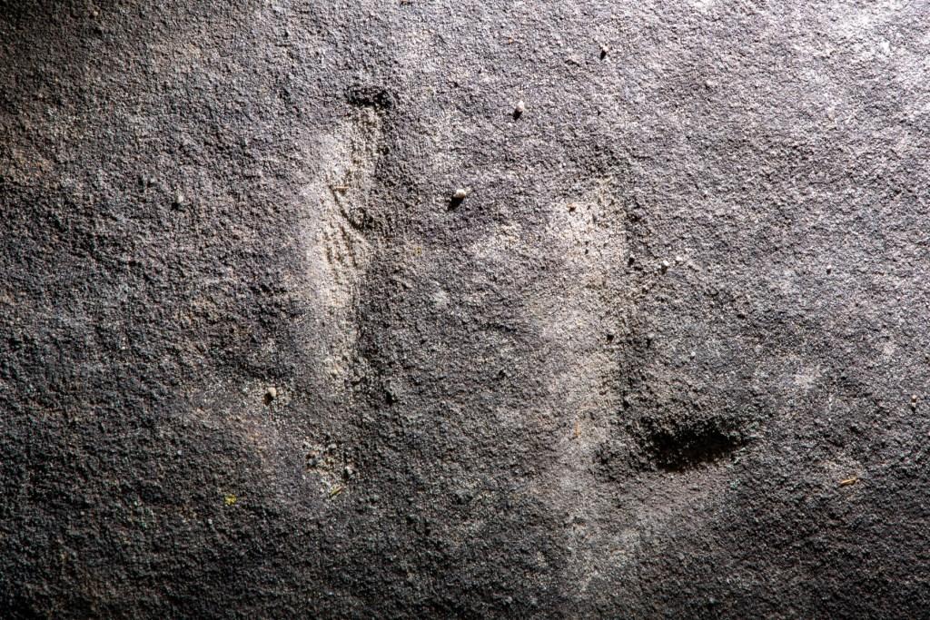 AWAT3789 LR Kissing Point Road Animal Tracks