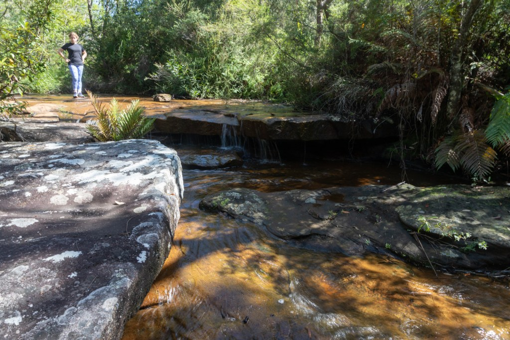 Canon EOS 6D Mark II241 LR Forest Path cascade (Illawarra Escarpment)