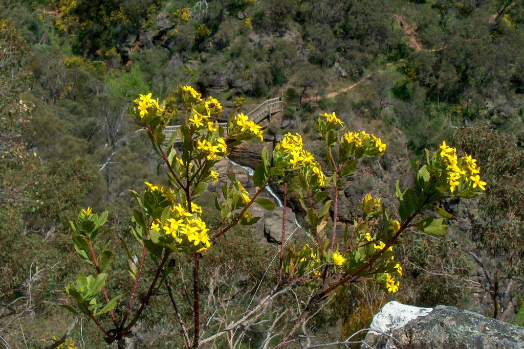 Yurrebilla Trail, Morialta Conservation Park