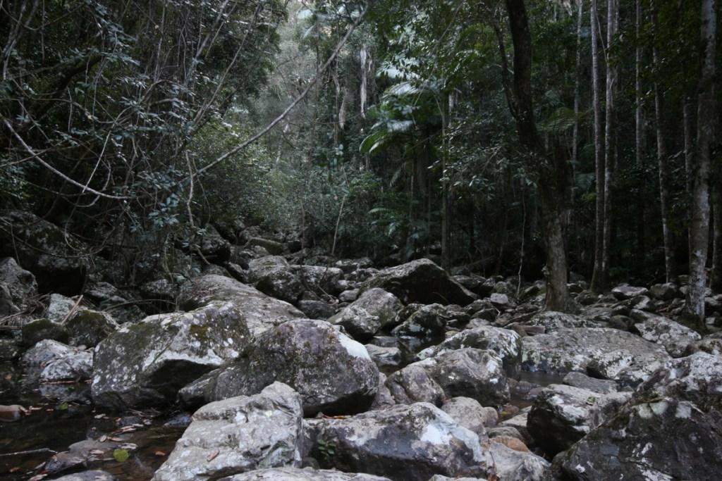 IMG 5962 LRP Minyon Falls (Nightcap National Park)
