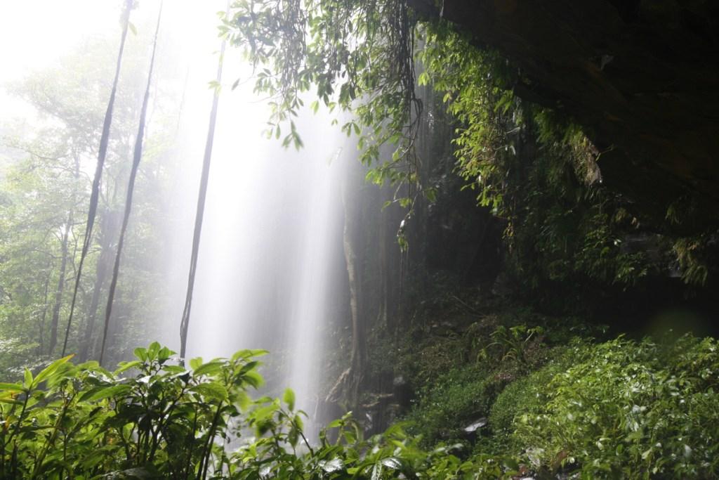 IMG 6052 LRP Crystal Shower Falls (Wonga Walk)