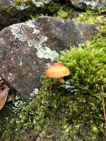 A mushroom. Nothing less, nothing more.