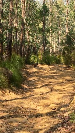 Some form of movable creature on the 4WD track