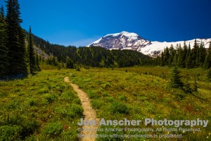 Rainier towering about the heart of Moraine Park