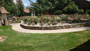 count down rose garden