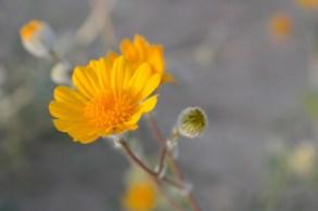 Anza Borrego State Park California
