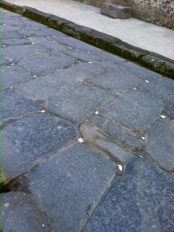 The little white stones in the street were ancient reflectors lit up by moonlight
