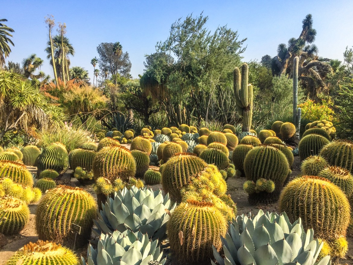 #huntingtoncactusgarden