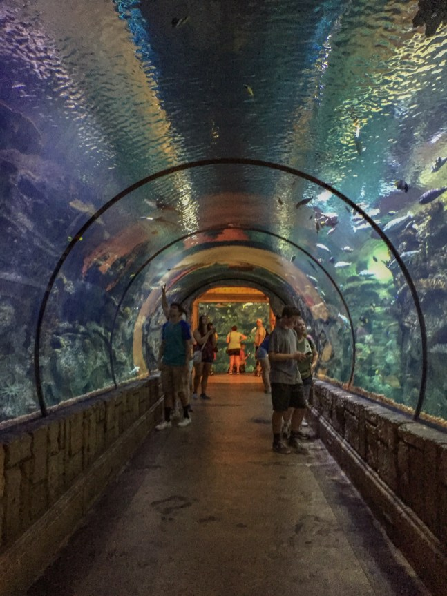 8 things to do in las vegas with kids hilarystyle