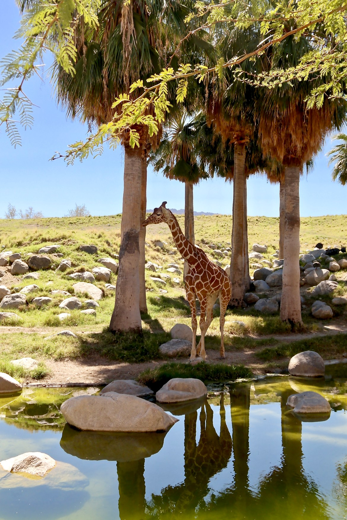 Things to do in Palm Desert with Kids