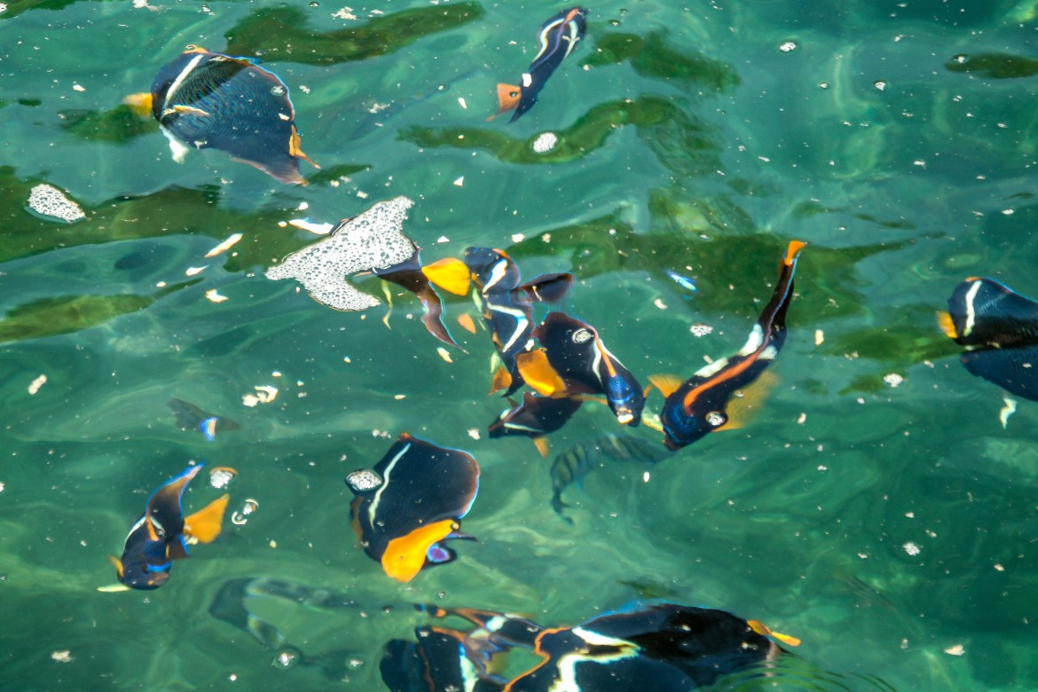 Things to do in Jalisco Mexico #feedthefish