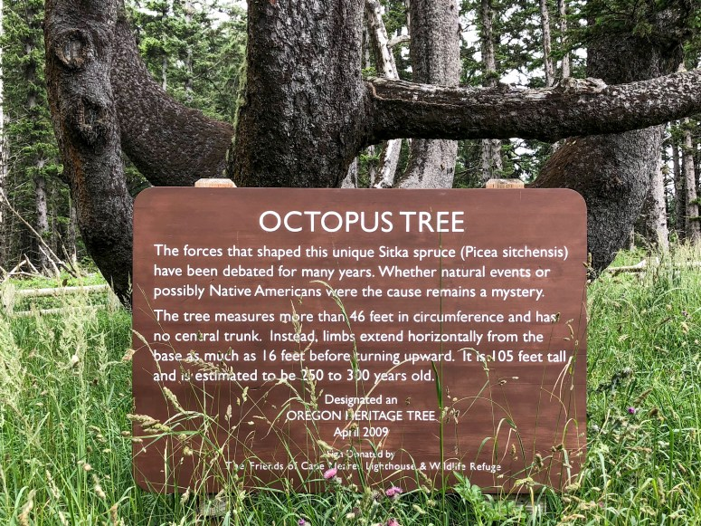 Cape Meares Octopus Tree Oregon