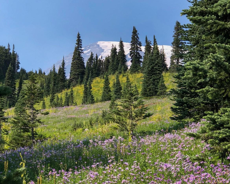Alpine Meadow Paradise Mount Rainier