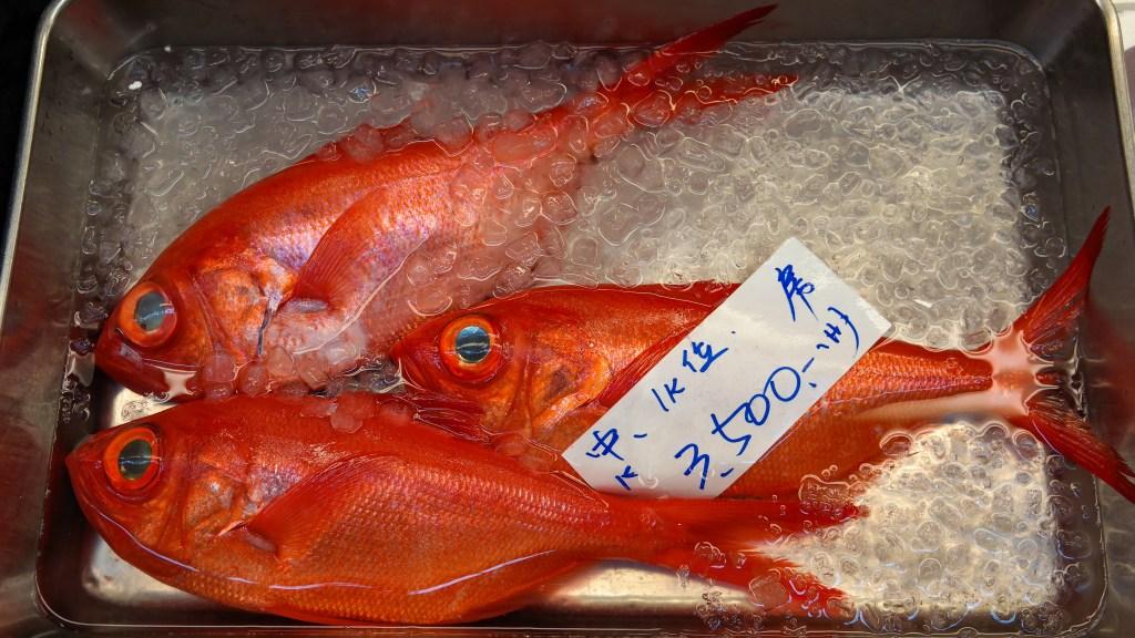 Tsukiji Fish Market Tokyo Japan