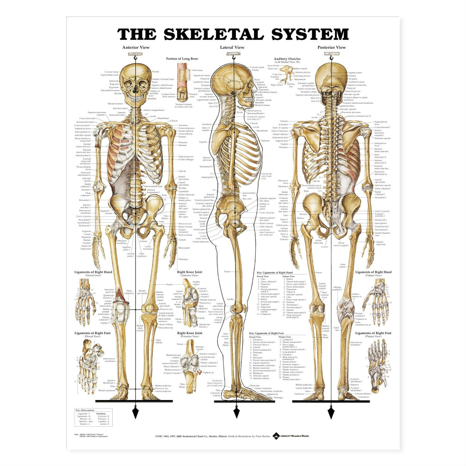 Forms In Nature Part 1 Human Skeleton