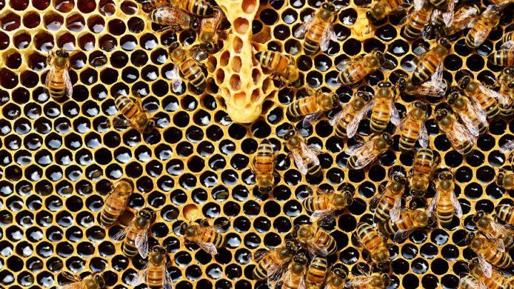 """""""Vom Bienensterben weit entfernt"""""""