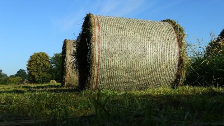 Neue rechtliche Grundlage für Ökolandbau-Förderung
