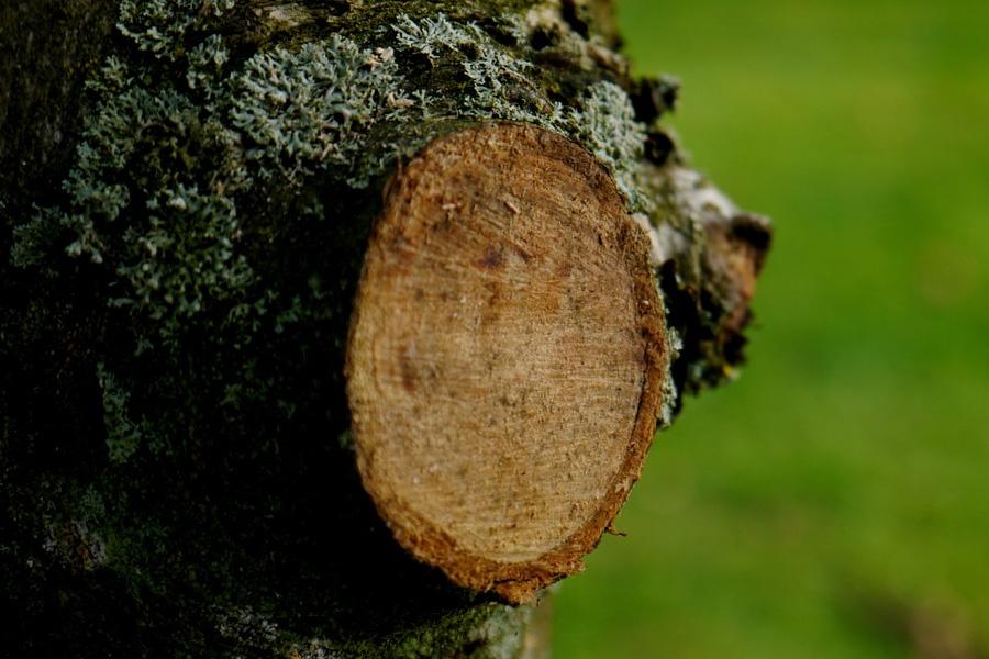 Baumfällungen Kehrwiedergrund