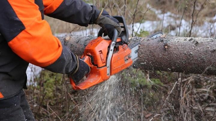 Gefahrbaum-Fällungen im Berghölzchen