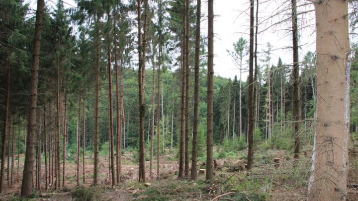 """Stürme und Käfer """"produzieren"""" Holz im Überfluss"""