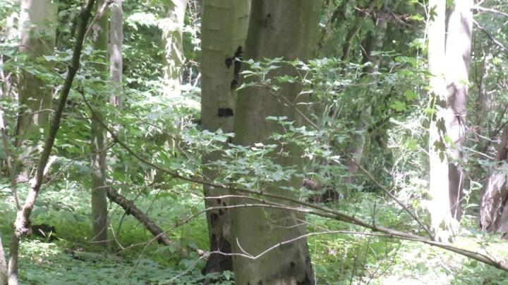 Gefahrbaumfällungen am Steinberg