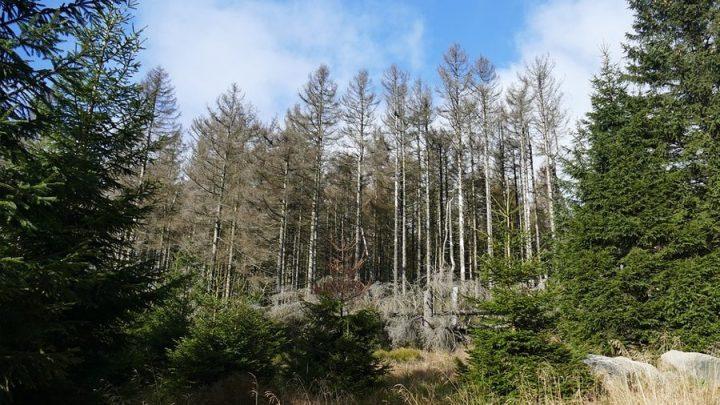 Waldsterben 2.0: Klimawandel verursacht dramatisches Waldsterben in unerwartetem Ausmaß
