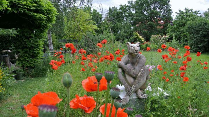 Rosen&Rüben: Aufblühen im Juli