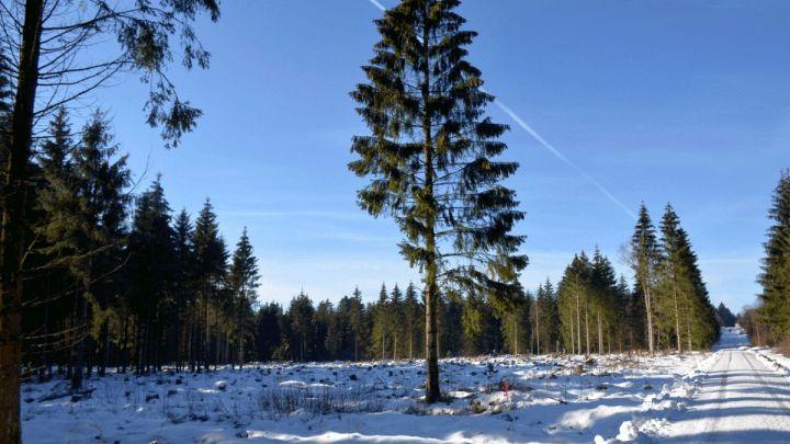 Schnee und Kälte lassen Käfer nicht kalt