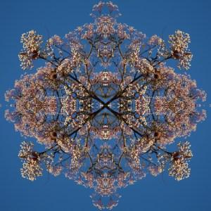 Blossom Burst #4