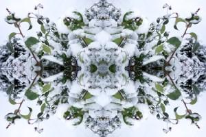 Snow Bow #4