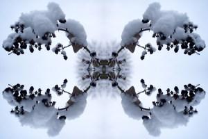 Snow Bow #1