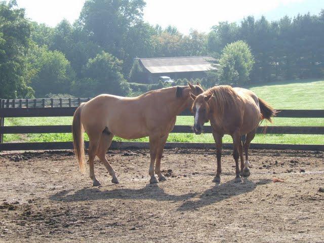 Dillard House Horses