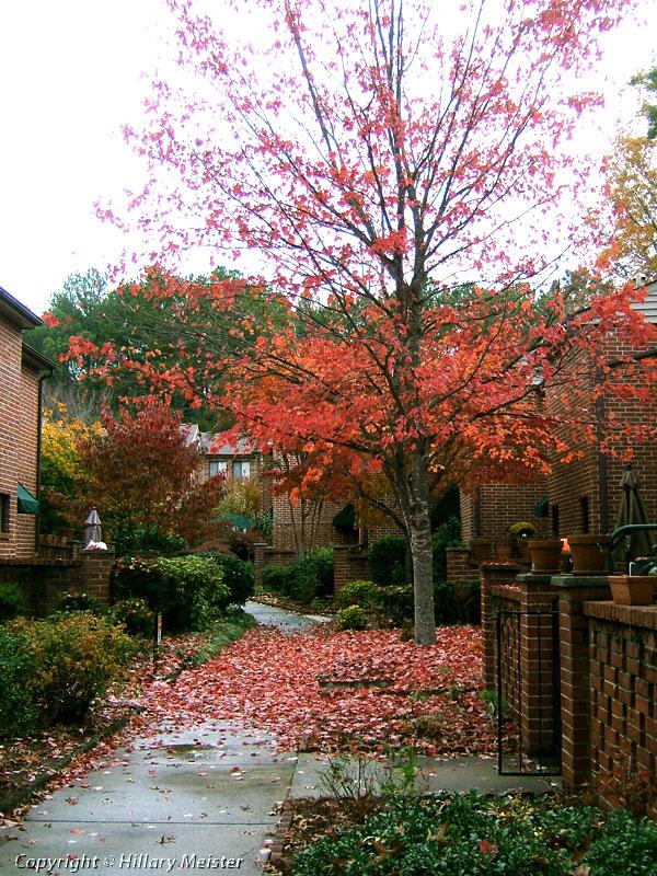 A fall tree