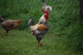 Newgrange Farm