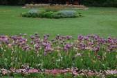 Flowers - Merrion Square