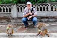 Rhesus monkeys enjoying cucumbers and ignoring the tourist