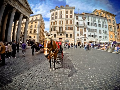 Horse and carriage in front of The Pantheon - Rome, Italy