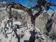 Gnarly tree