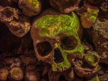 Moldy skull in the Catacombs