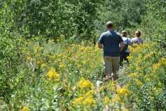 Hike through wildflowers to Stewart Falls