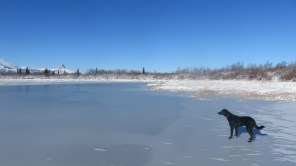 Luckily the ole puppydog doesn't seem particularly interested in exploring the still-forming ice