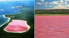 pink lake australie