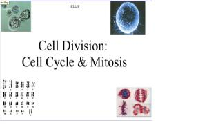 Cell Cycle, Mitosis, & Meiosis | Mrs Haley'sBiology Site