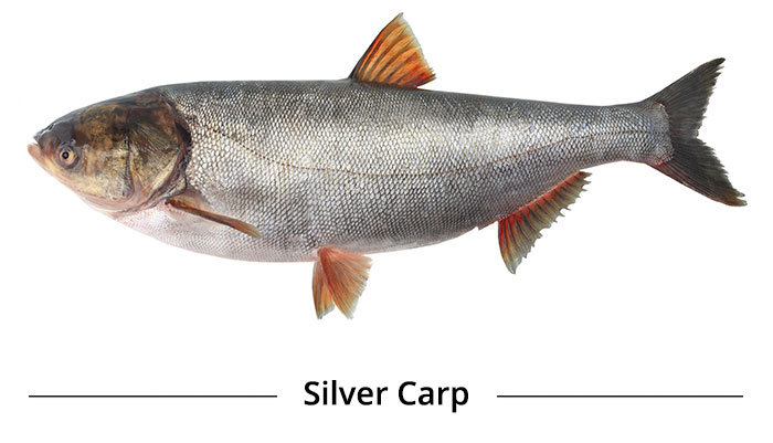 Was Asian carp dna interesting moment