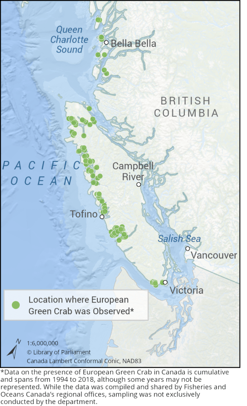 This map depicts the locations where European Green Crab was observed on the Pacific Coast of Canada. In British Columbia, the green crab is commonly found along the coastline of Queen Charlotte Sound and along the entire west coast of Vancouver Island. The species has not been observed in the inland waters of the Salish Sea.
