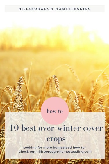 10 best over winter cover crops