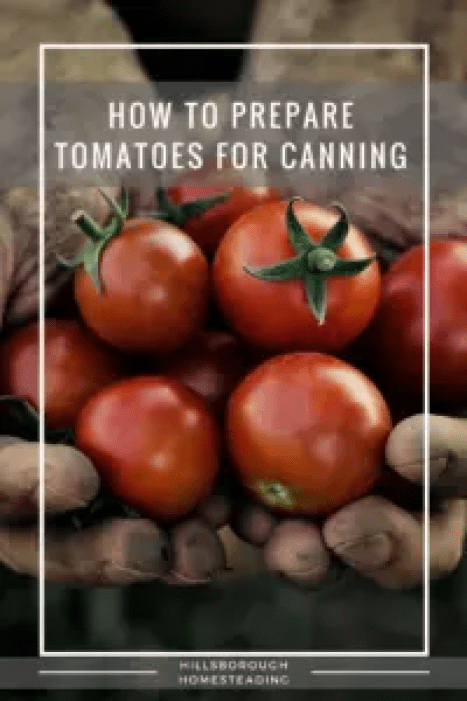 prep tomatoes for canning